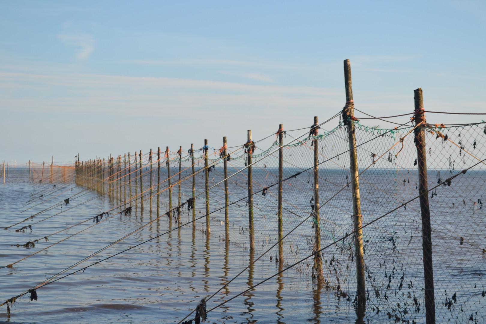 Fishing Nets Sandyhills
