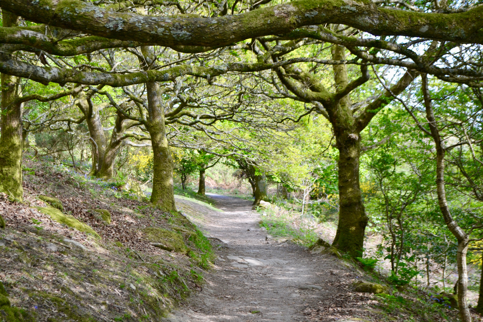 Jubilee Path Kippford to Rockcliffe