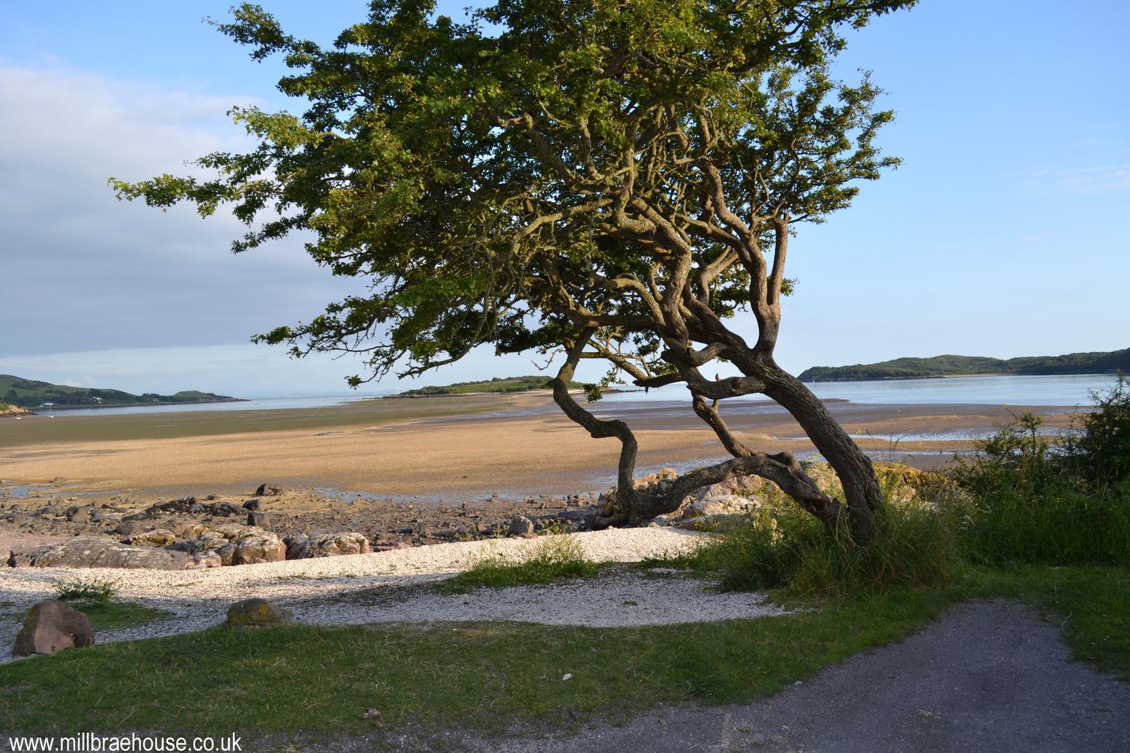 Shell Beach Kippford