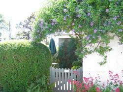 D Hedge