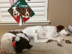 Pups with their ornaments