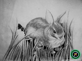 RABBIT SPIRIT ANIMAL (PENCIL) 2018 DB CREATIVE FORCE