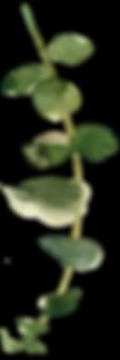 branch— копия 2.png
