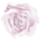 pink-rose2-a.png