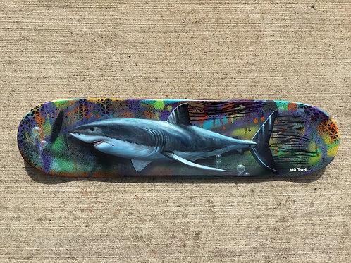 """""""Shark Tag"""""""
