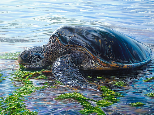 'Cycle of Life - Honu'