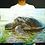Thumbnail: 'Cycle of Life' - Turtle