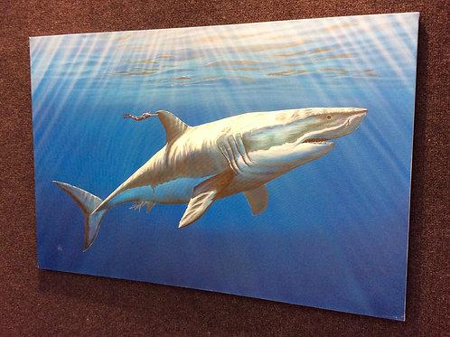 'Monster Shark'