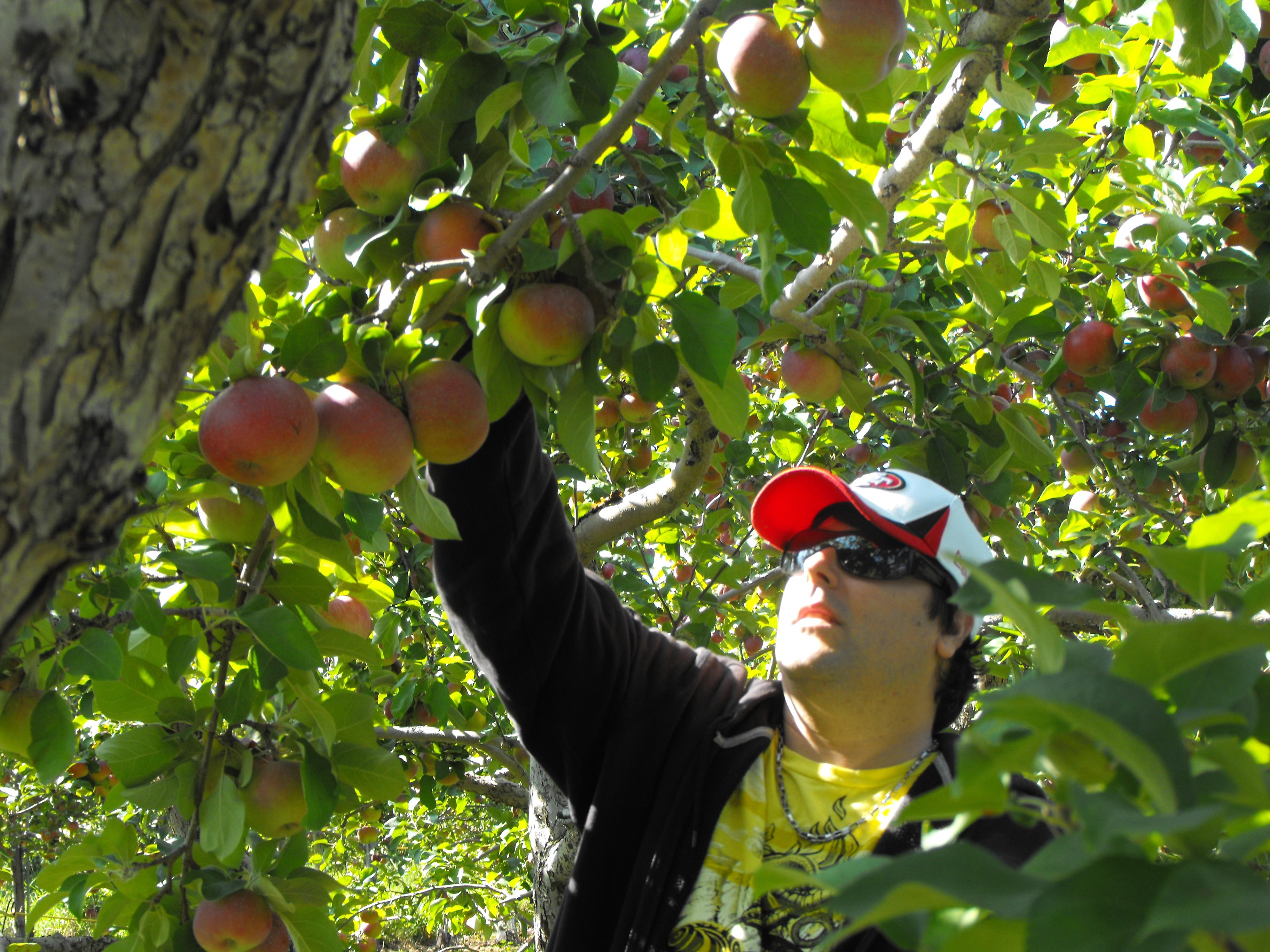 vacances et pommes 2013 215