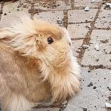 konijntjes5.jpg
