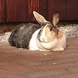 konijntjes2.jpg