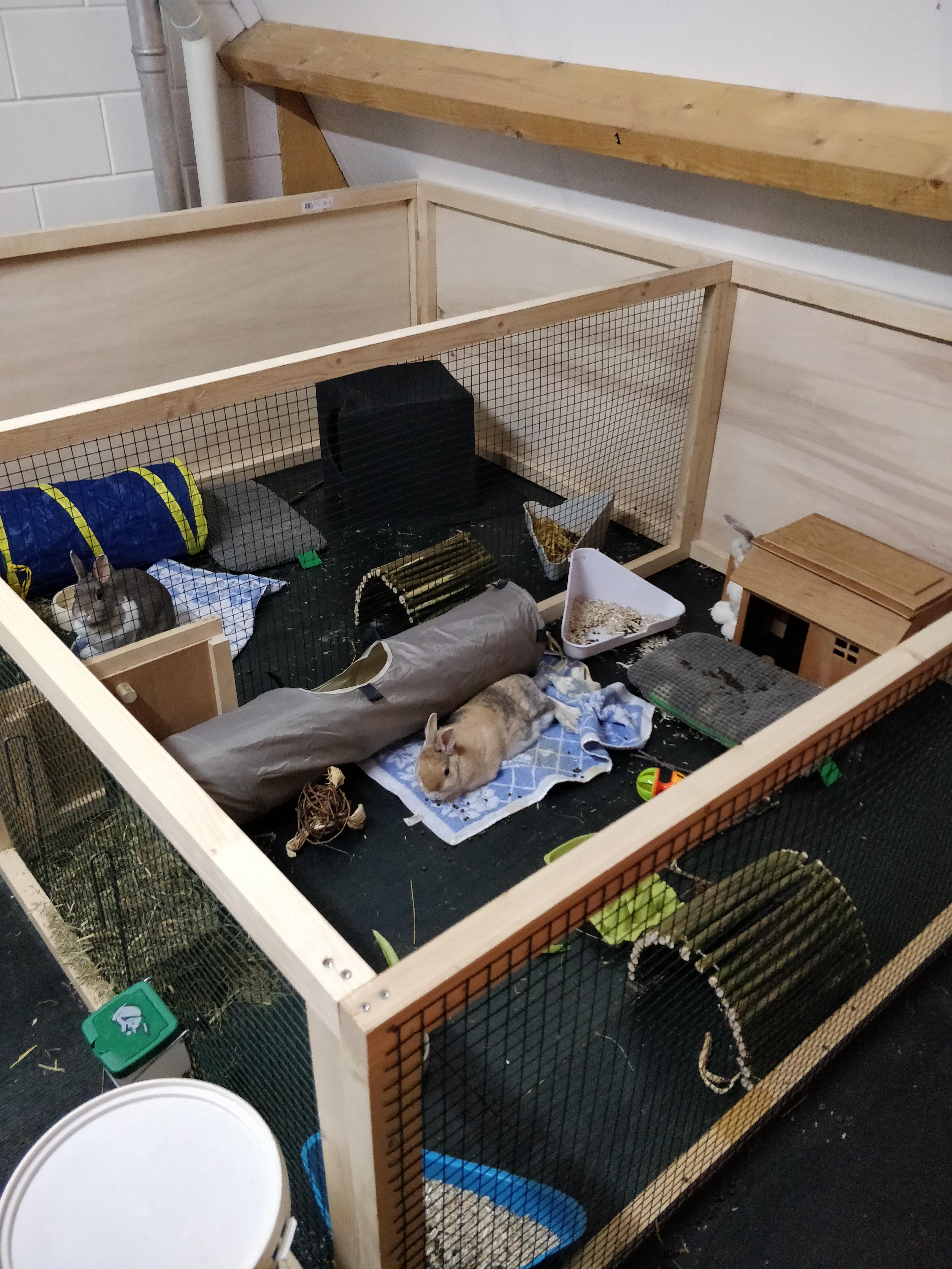 Voldoende ruimte in de ren