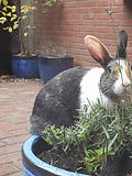 konijntjes1.jpg