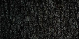 the_bark.jpg