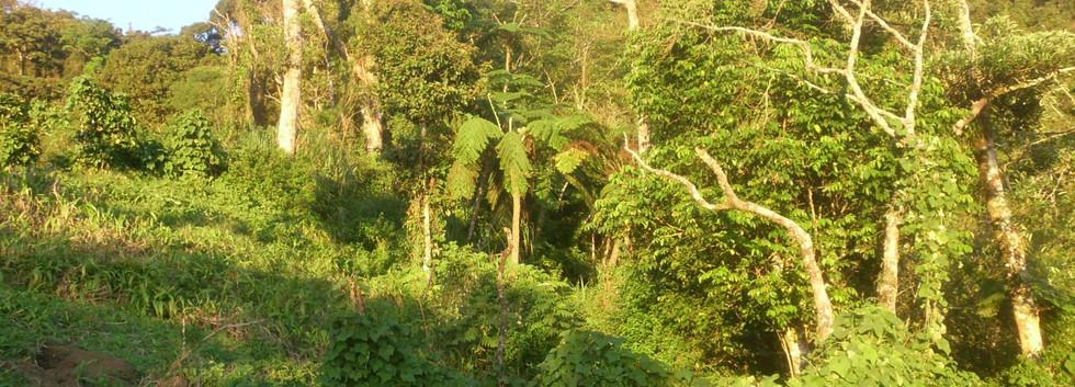Mt. Banahav, Philippines
