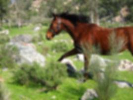 Astra, Wisdom of Horses