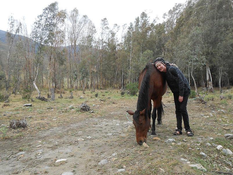 coaching, meditation, retreat with horses
