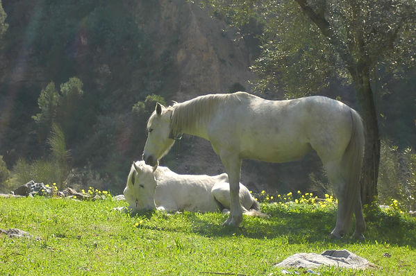 Two white horses, Wisdom of Horses, Mutual respect