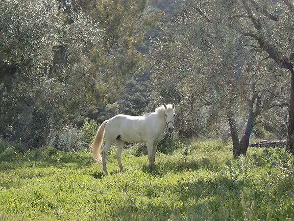 Yuma, beautiful horse of Wisdom of Horses, Southern Spain, teaches the art of dying.