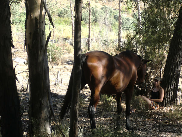 woman sitting with brown horse in forest