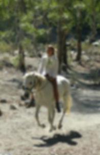 Kim Roswitha, founder of Wisdom of Horses