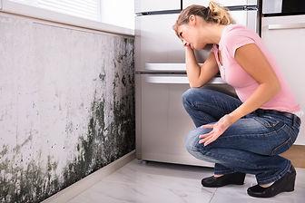 mold-removal-ny.jpg