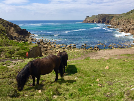Sea Horses and Sheds