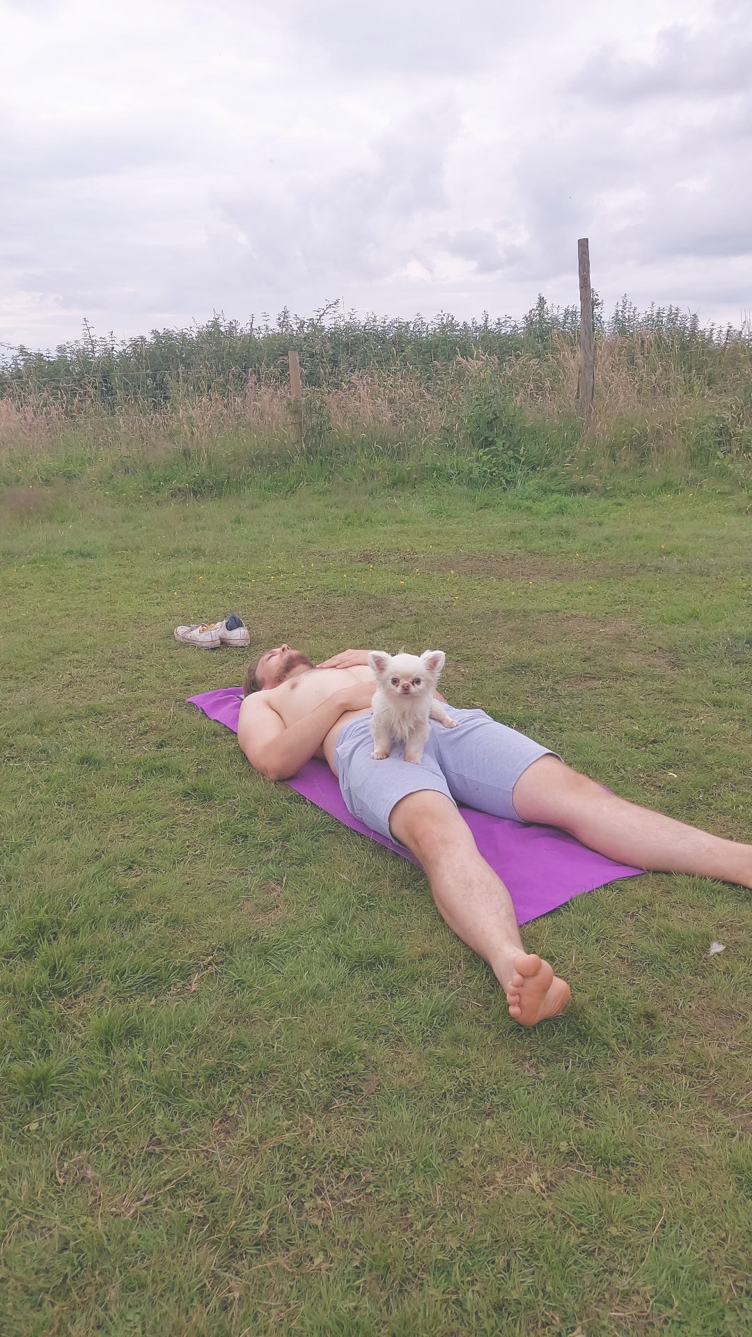 Yoga with your Chihuahua