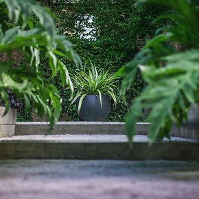 plant pot in a dark and exotice garden