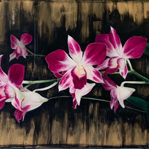 Orchid 10x8 $40 per week
