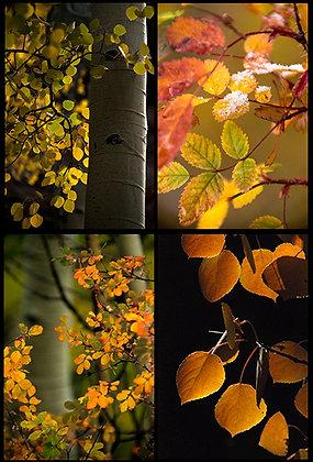 Colorful Close-ups