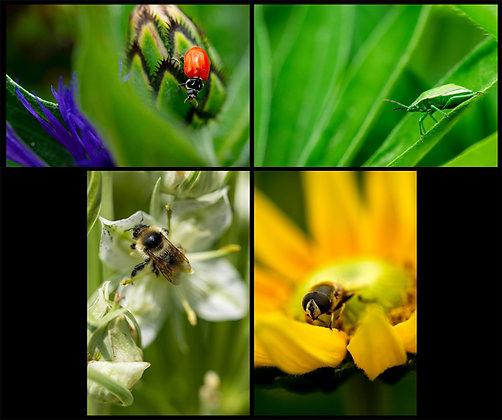 Bug Your Besties