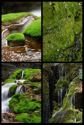 Marvelous Moss