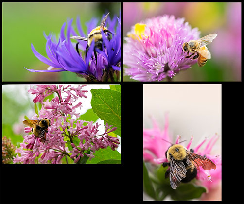 Bee Bunch