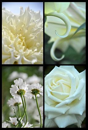 Pure Petals