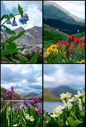 Peaks and Petals