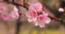 nature-3238564_1920_edited.jpg