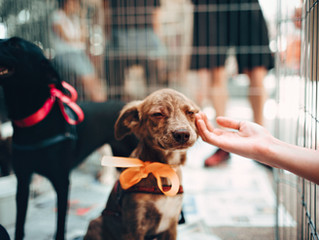 İstanbul Hayvan Barınakları ve Kısırlaştırma/Rehabilitasyon Merkezleri İletişim Bilgileri Listesi