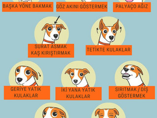 Köpeklerde Stres Sinyalleri, Nedenleri ve Azaltmaya Yardımcı Öneriler