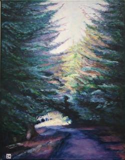 Conifer-Walk-Perthshire-Cathryn-Royle