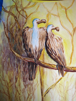 vultures-in-swaziland