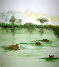 hippos-in-swaziland