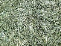 grass bales close up 080719.jpg