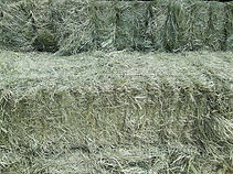 grass bales 080719.jpg