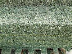 alfalfa bale 080719.jpg