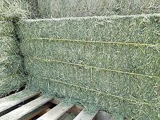 alfalfa bales 080719.jpg