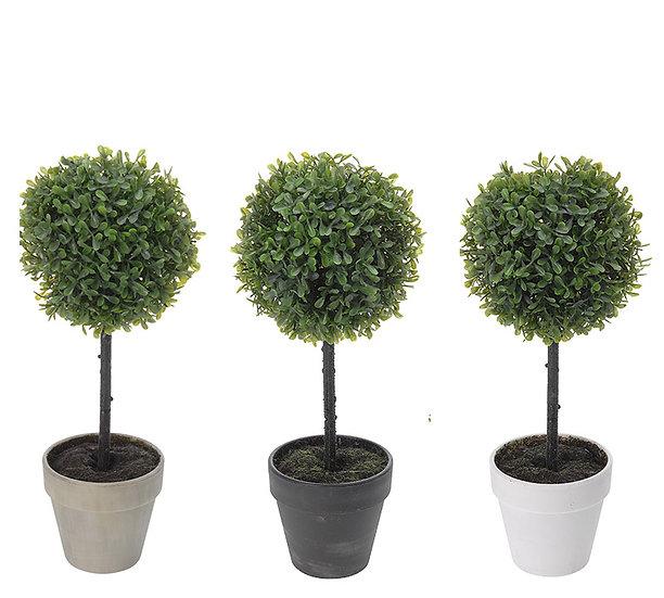 Φυτό BOxus σε γλάστρα 3χρ.,16x40cm | ZAROS