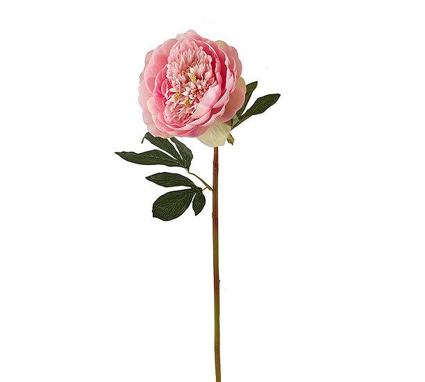Παιώνια Lactiflora, ροζ, 65cm | ZAROS