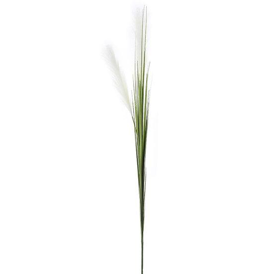 ΚΛΑΔΙ ΚΡΕΜ PAMPAS GRASS-iliadis