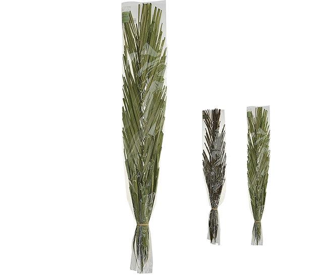 Αποξηραμένα φύλλα φοίνικα, 95-100cm | ZAROS